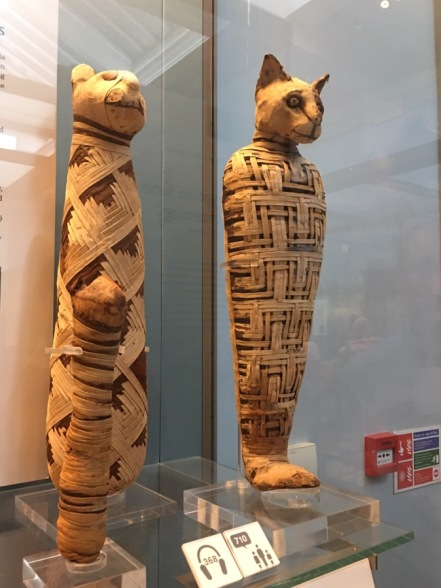 Cats mummified